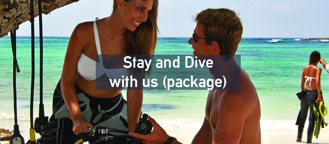 Stay and Dive with us